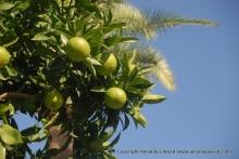 Roman Limes