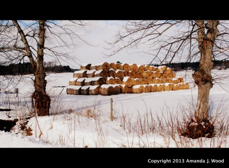 These were the last bales to be rescued from the fields. In the fall it was too wet to collect them after baling.