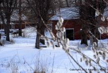 Budding barns