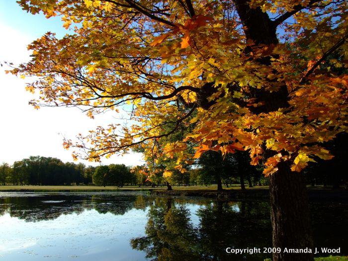 Drottningholm Slott 2009 fall colours