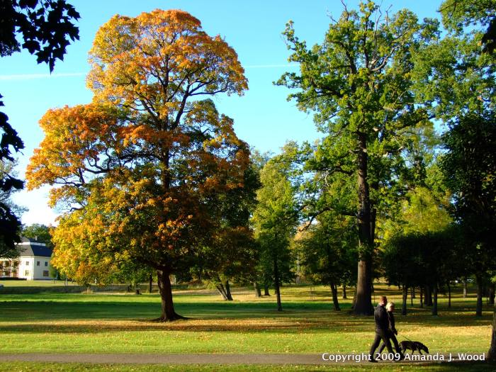 This was in the fall of 2009 on the very large grounds of Drottningholm Slott