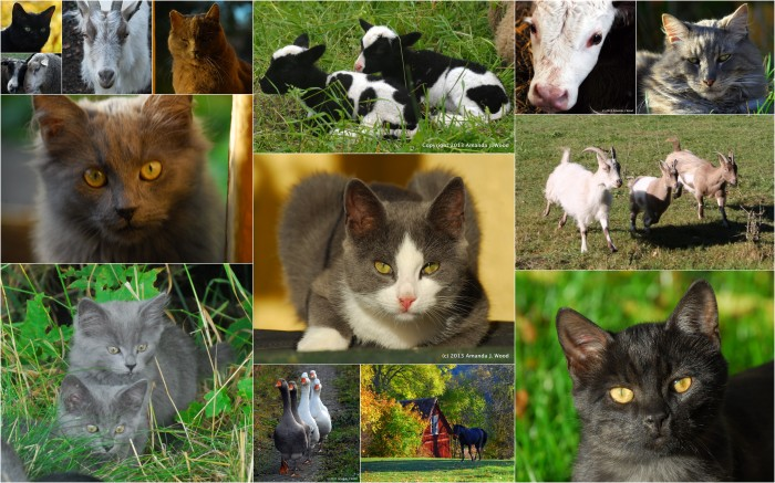 Cats, kittens, geese, calves, lambs, goats, and a horse. Just some of the many animals that crossed my path (or bit me) this year.