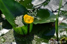 Lilly pads and flowers round out the colors and textures